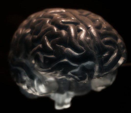 le système nerveux profite des bienfaits du CBD